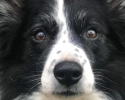 YOUR DOG'S OLD AGE—PREPARING NOW FOR SIGHT OR HEARING LOSS